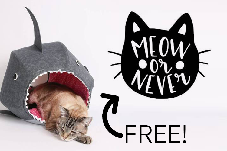 Meow or Never FREE SVG